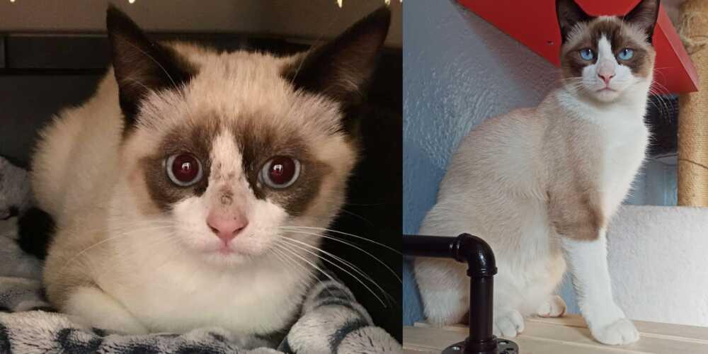 foto gatti dopo adozione