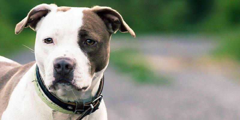 Pieve Vergonte 64enne uccisa dal suo cane