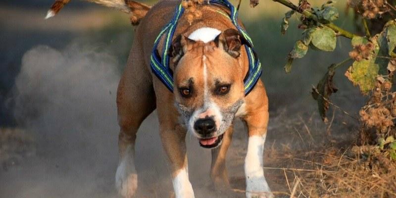 Sassuolo anziana sbranata da due cani